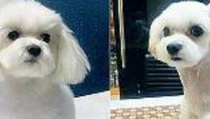 Botox für Hunde