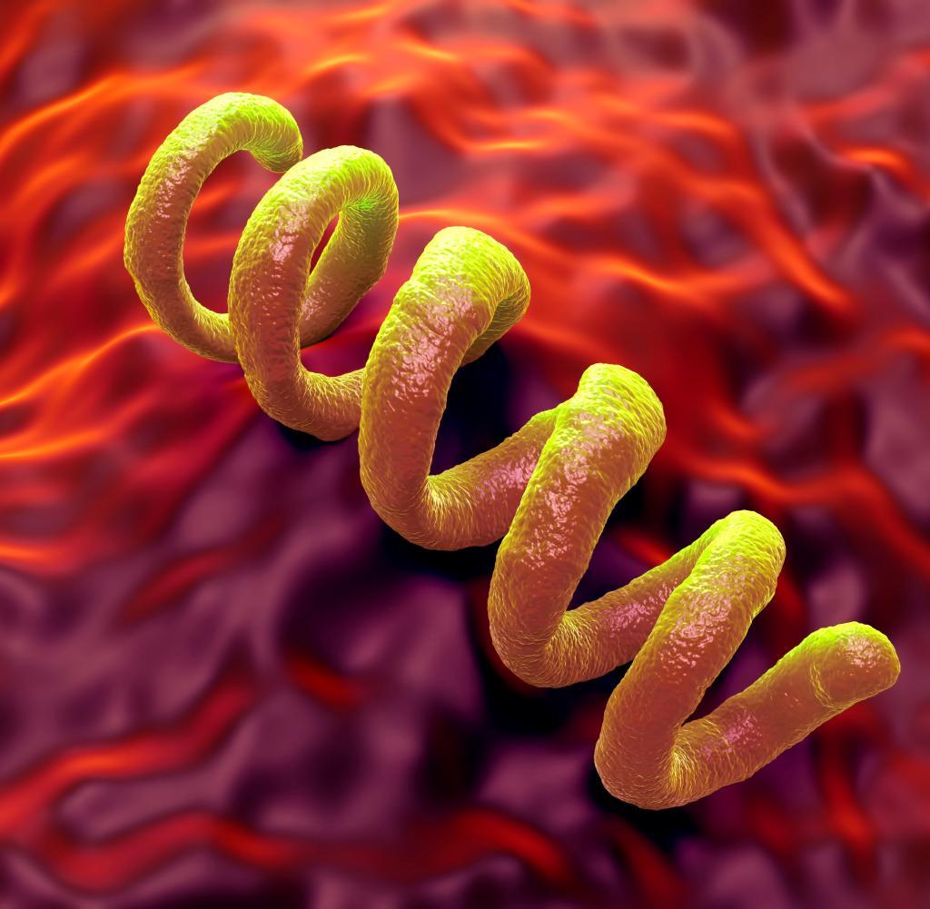 Syphilis-Infektionen steigen in Deutschland weiter an