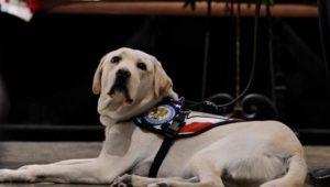 Labrador Sully hält verstorbenem US-Präsidenten über Tod hinaus die Treue